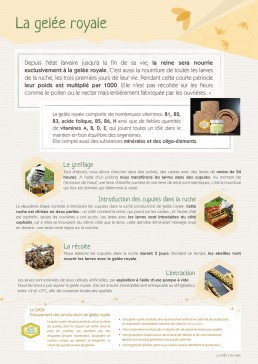 picopico affiche apiculteur chartreuse isère graphiste professionnel freelance